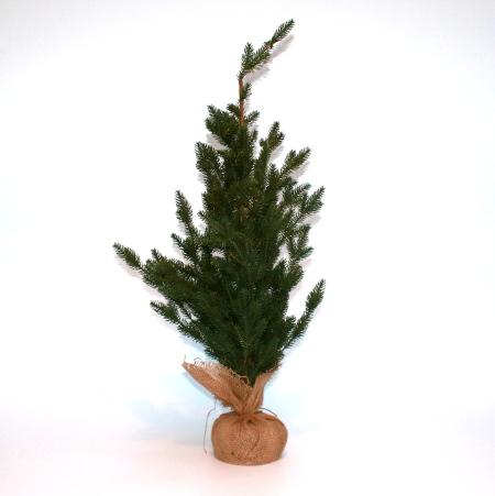 Billede af Aase Juletræ med jutefod - 90 cm høj